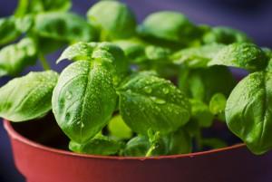 Herbs to Treat peripheral neuropathy