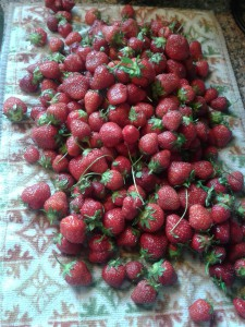 Dry Strawberries on a mat to dry